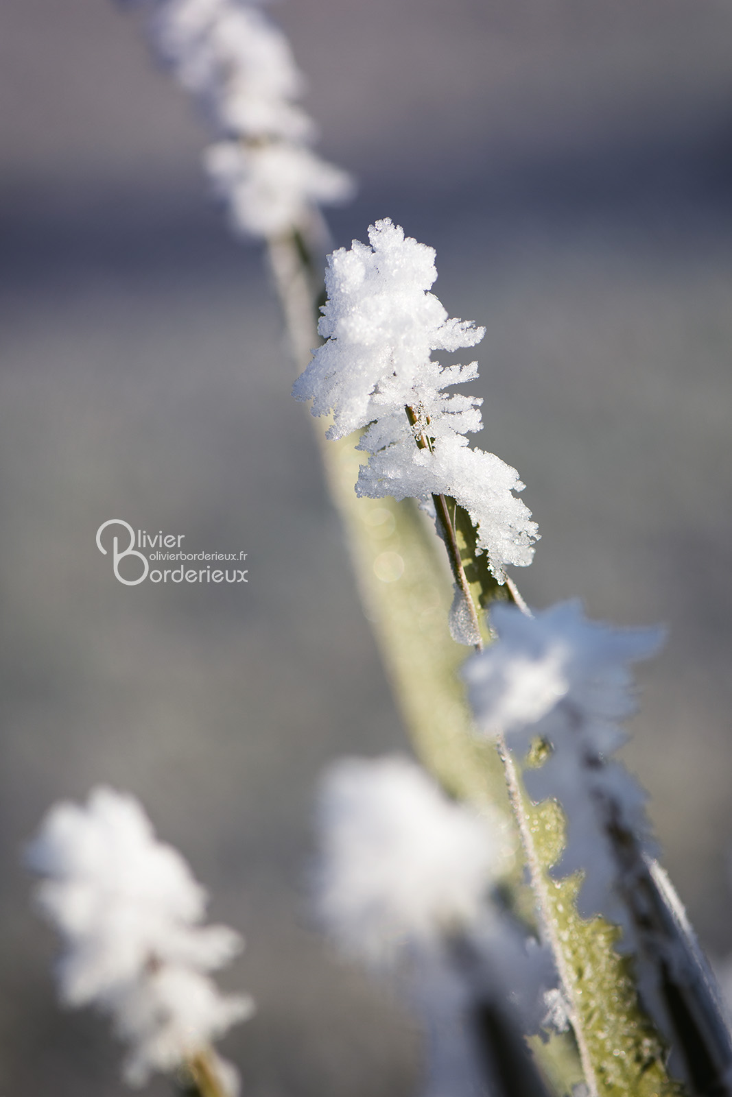 Arrivée de l'hiver