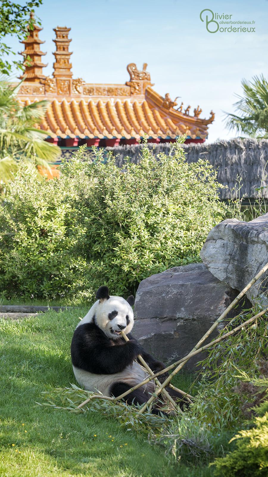 Zooparc de beauval le plus beau zoo de france for Appart hotel zoo de beauval
