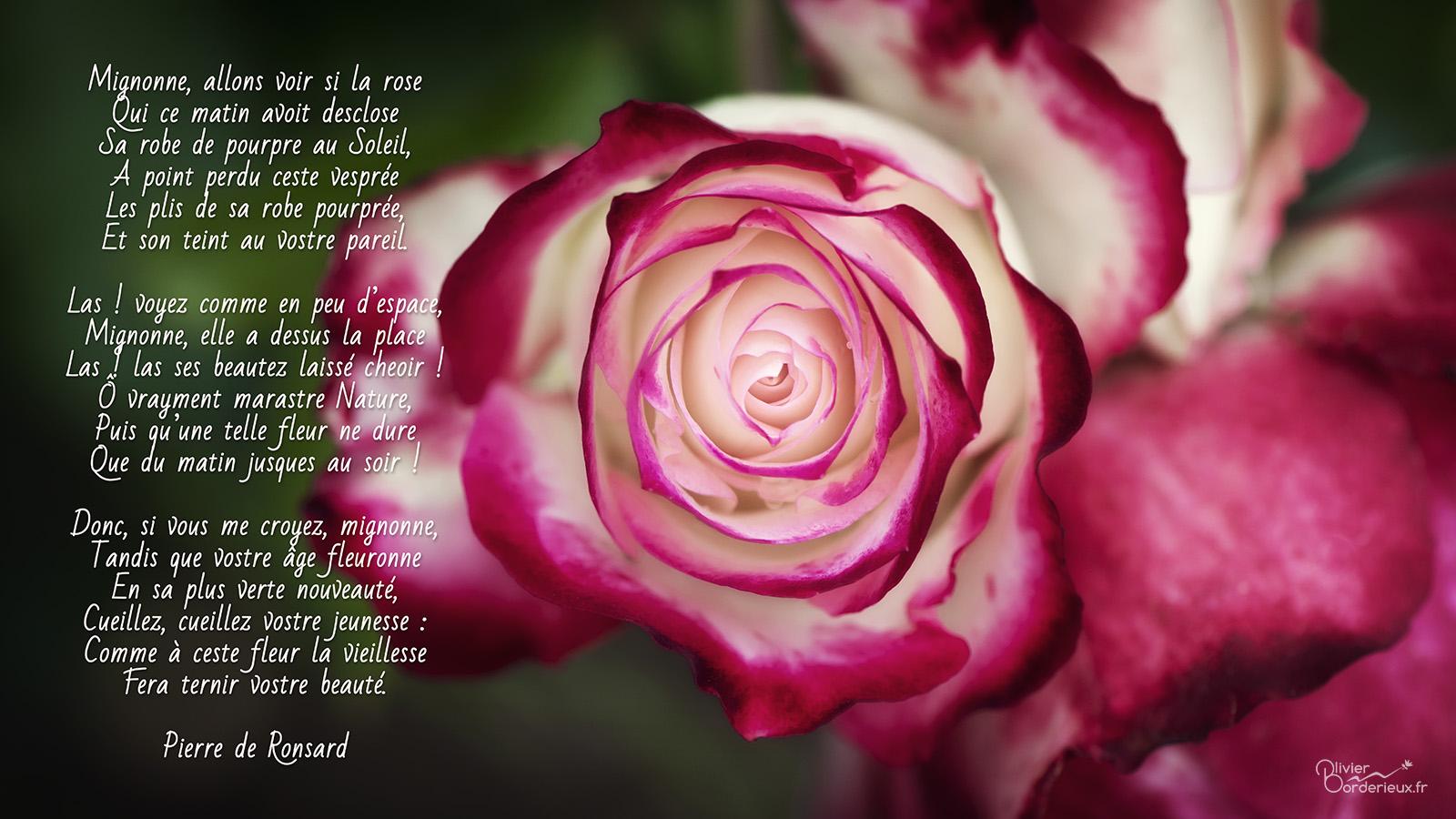 Mignonne alons voir si la rose