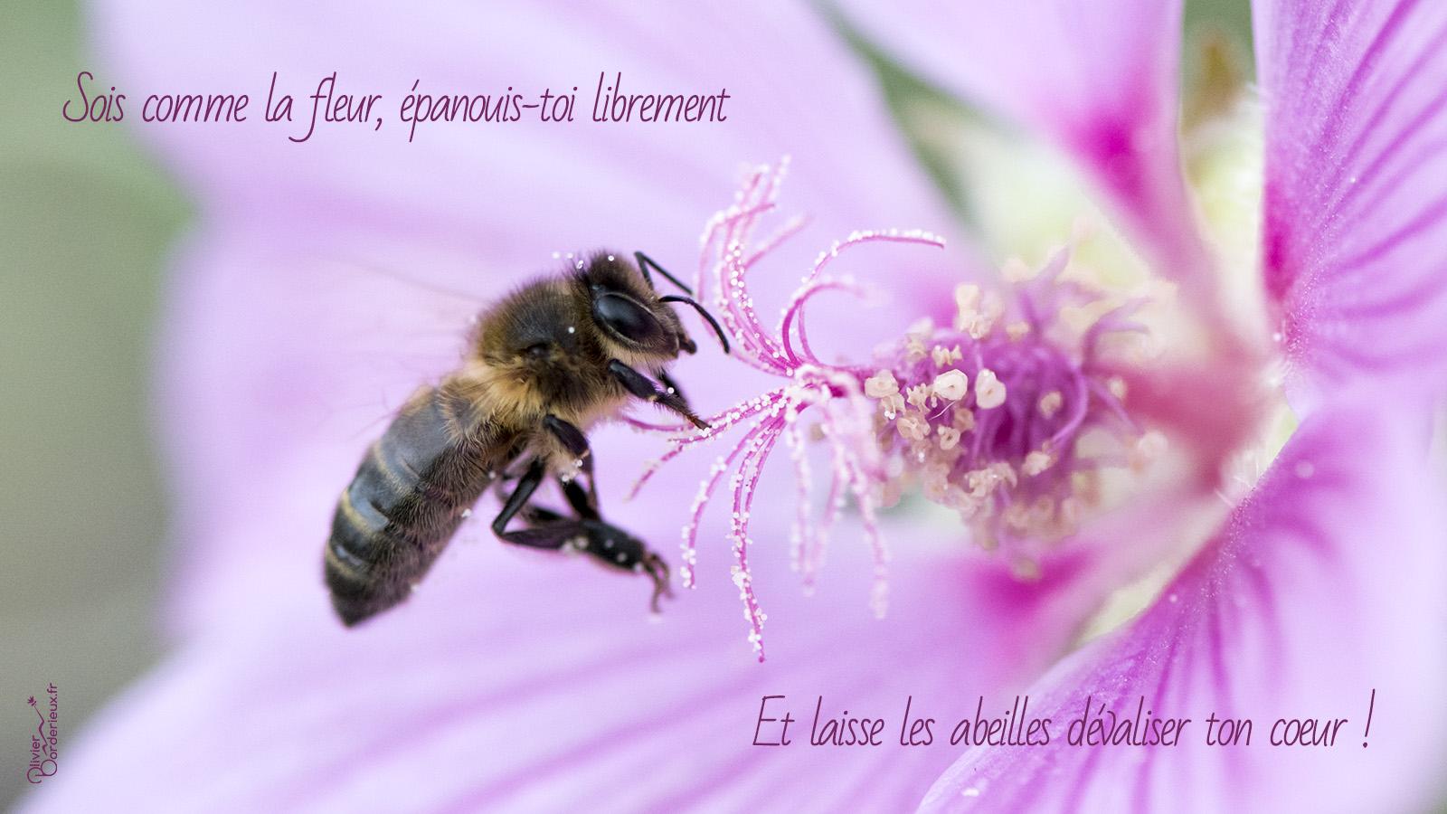 Sois comme la fleur